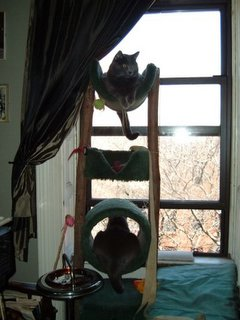 cats on their tree